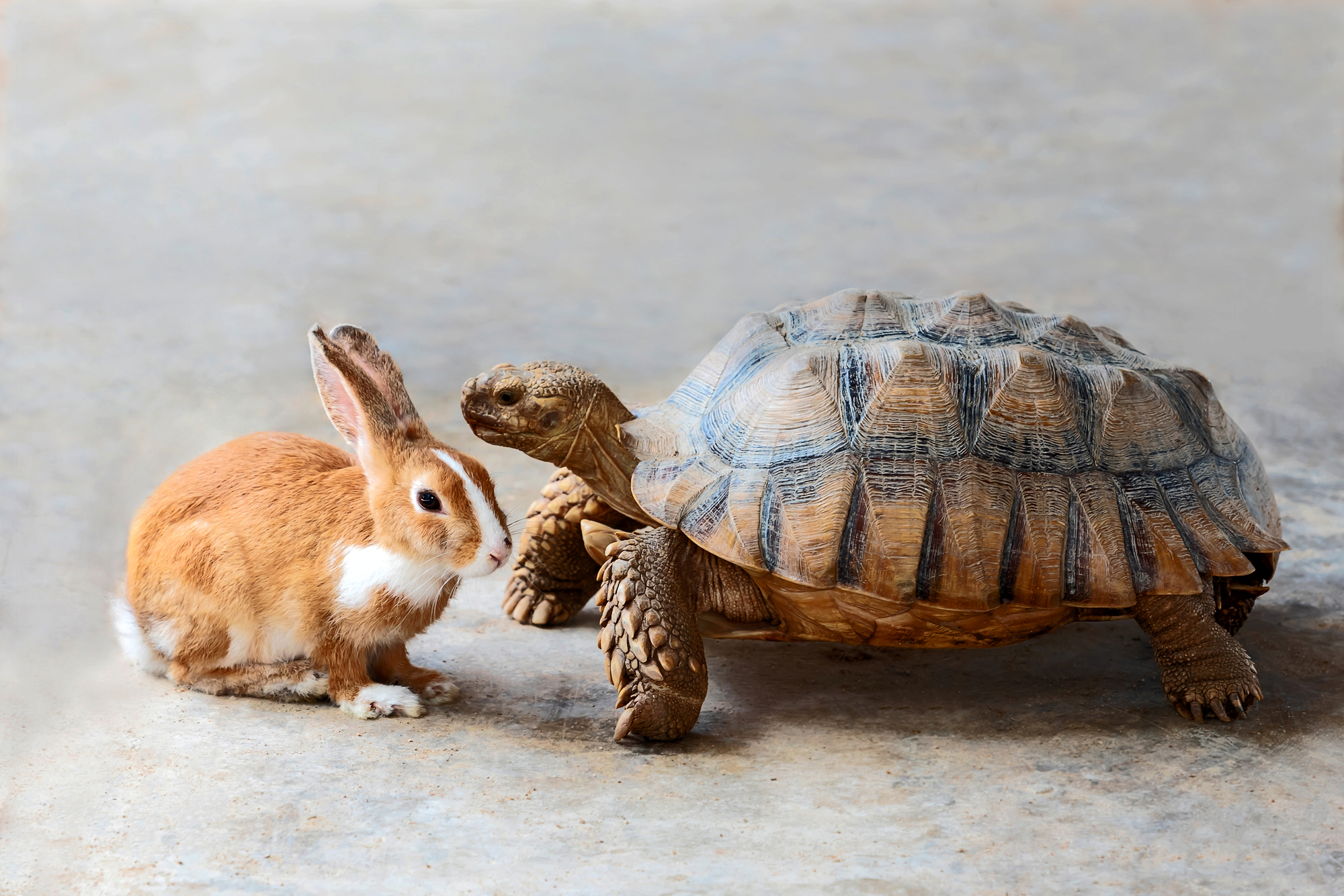 Rabbit and turtle are discussing the competition