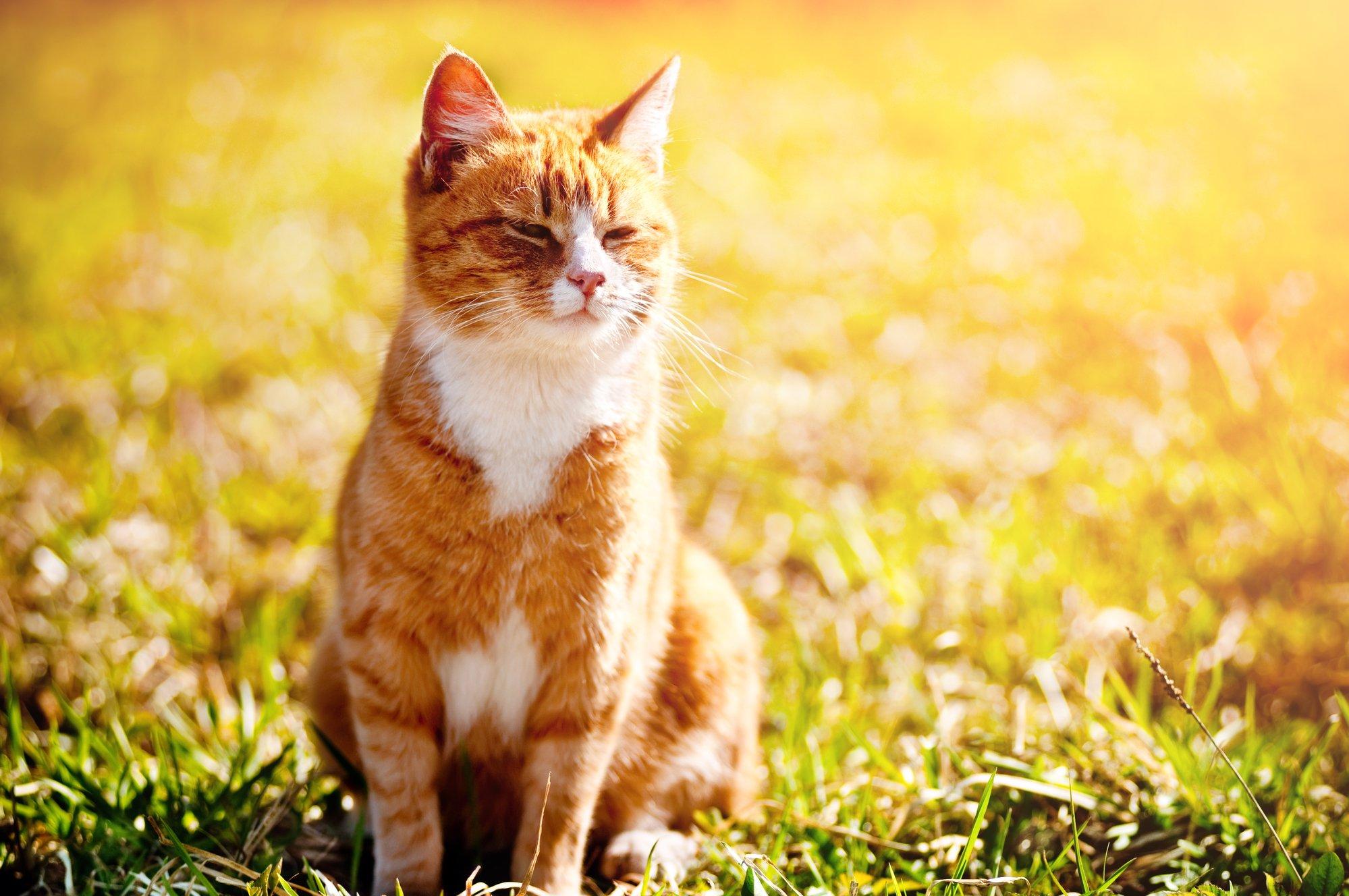 orange tabby cat sitting in the sun